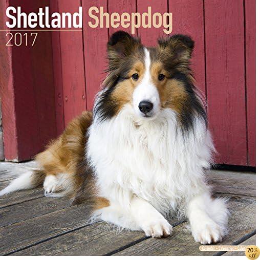 TShetland Sheepdog Calendar 2017 - Sheltie - Dog Breed Calendars - 2016 - 2017 wall calendars - 16 Month by Avonside