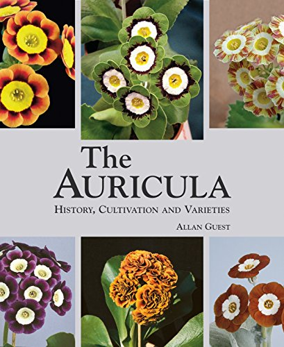 the-auricula-history-cultivation-and-varieties