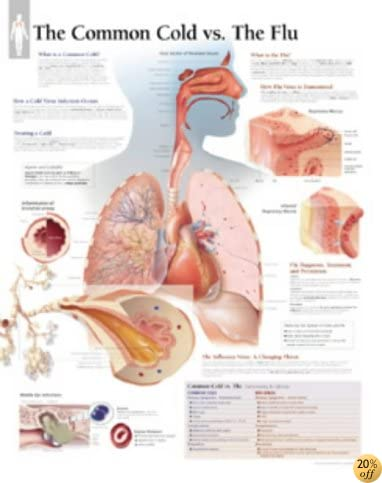 The Common Cold chart: Laminated Wall Chart