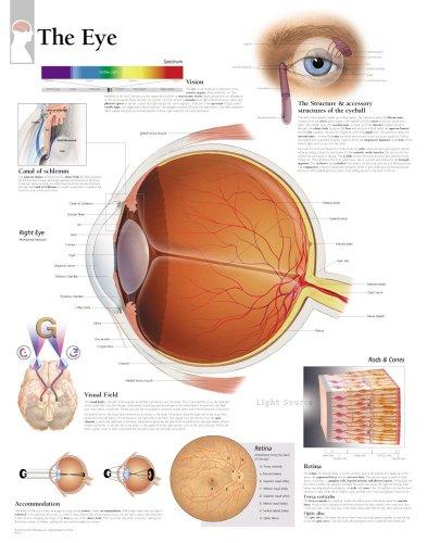 the-eye-chart-laminated-wall-chart