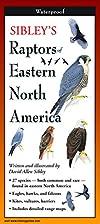 Sibley's Raptors of Eastern N.A.…