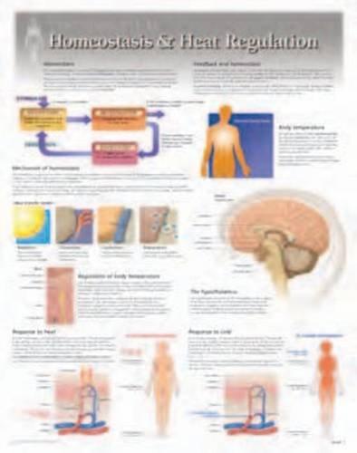 nutrition-heart-regulation-wall-chart-8281
