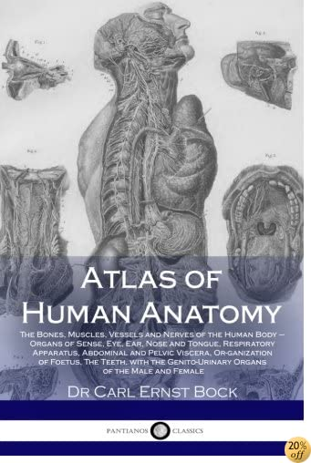 Atlas of Human Anatomy: The Bones, Muscles, Vessels and Nerves of the Human Body ? Organs of Sense, Eye, Ear, Nose and Tongue, Res-piratory Apparatus, ... Genito-Urinary Organs of the Male and Female