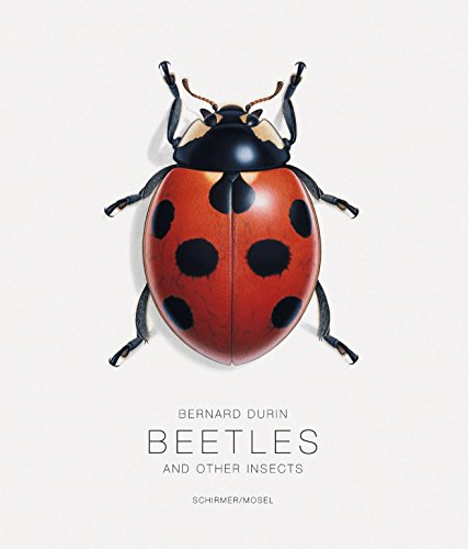 bernard-durin-beetles-and-other-insects
