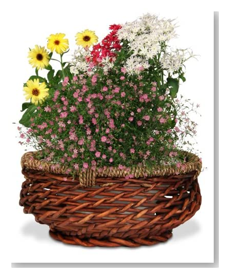 Organic Gifts for Valentine's Day. Broadway Basketeers Organic and Natural