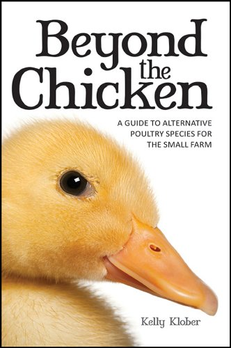 beyond-the-chicken-a-guide-to-alternative-poultry-species-for-the-small-farm