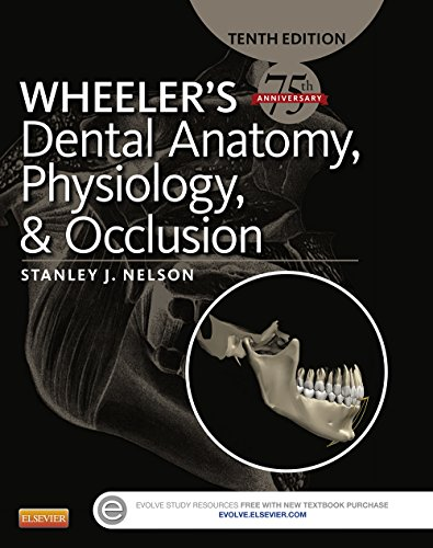 wheelers-dental-anatomy-physiology-and-occlusion-e-book