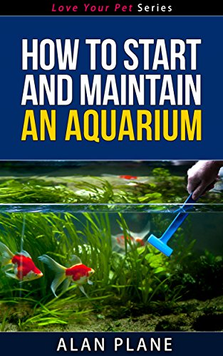 how-to-start-and-maintain-an-aquarium-love-your-pet-series