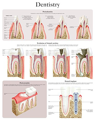 dentistry-e-chart-quick-reference-guide