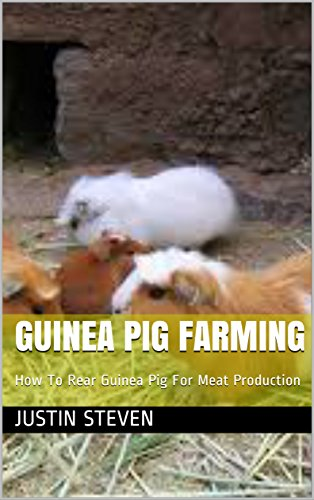guinea-pig-farming-how-to-rear-guinea-pig-for-meat-production