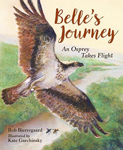 belles-journey-an-osprey-takes-flight