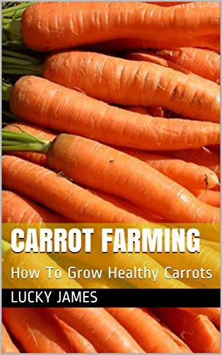 carrot-farming-how-to-grow-healthy-carrots