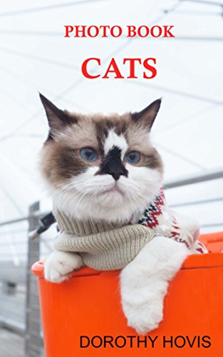 photo-book-cats-kittens-and-cats-for-kids