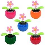Solar Dancing Flower-Assorted Colors