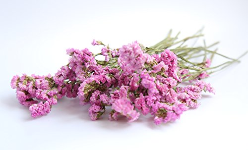 Forget-Me-Not Dried Flower Bunch Fragrant, 20 Pcs (Pink)