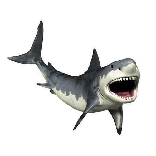 Great White Shark Peel and Stick Wall Decal
