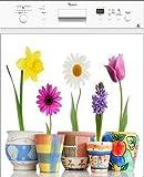 Stickersnews - Sticker lave vaisselle électroménager déco Pots de fleurs 60x60cm Réf 178