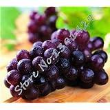 Mixed 50 Seeds/ Bag Grape Fruit Seed , XINJIANG Tulufan Grape Tree Seedlings, Potted Bonsai Plant Kyoho Grape...