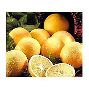 The grapefruit diet does it help you lose weight?