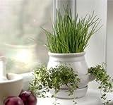 Primrose Kitchen Herb Pot - White