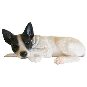 Amazon.com: Rat Terrier Black/White Collectible Dog