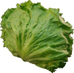 レタス(れたす) シャキシャキ食感が魅力! サラダ野菜!! 1玉 【九州産・大分・長崎・福岡産】