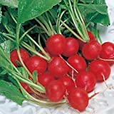 Radish Red Round 50gm/1000++ Seeds Pack By Seedscare India