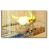 Tidy Bird No-Mess Bird Feeder