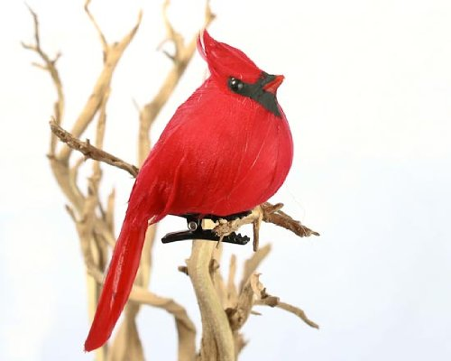 Beautiful Bird Ornaments for Christmas Trees - XpressionPortal