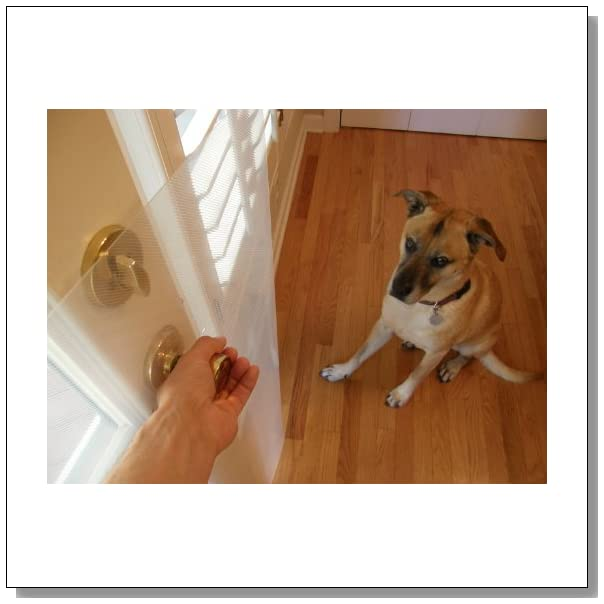 Ways To Stop A Dog From Scratching Up A Door The Adventures Of The  Clawguard The