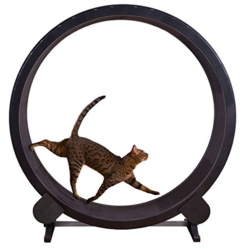 One Fast Cat Exercise Wheel - Black