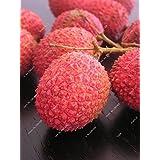 Litchi Subtropical Fruits Seasonal Fresh 10 Seeds DIY Garden Bonsai Fruit Rare Lychee Candy