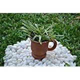 The Garden Store Cup Planter With Handle