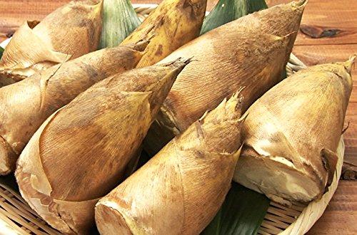 【 国産 】 北九州 純 合馬 地区 産 高級 たけのこ ( 筍 ) 約1kg | 期間限定 | 掘りたて | 産直 タケノコ | 竹の子
