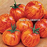 100pcs New Outdoor Plants Promotion Garden Tomato Seed Potted Bonsai Balcony Fruit Vegetables Seed Tomato Seeds A4
