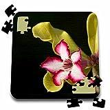 Danita Delimont - Flowers - Desert-rose, Adenium obesum, South Africa. - 10x10 Inch Puzzle (pzl_206968_2)