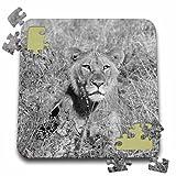 Angelique Cajam Big Cat Safari - Young lion looking at a pray - 10x10 Inch Puzzle (pzl_26821_2)