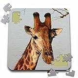 Angelique Cajam Safari Giraffes - South African Giraffe head face sky background - 10x10 Inch Puzzle (pzl_20123_2)