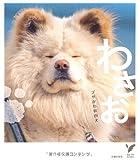 ブサかわ秋田犬 わさお (セレクトBOOKS)