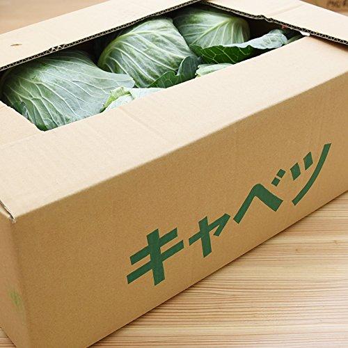 九州産 (熊本) キャベツ 1ケース 8玉  新鮮 生 産地直送