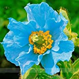 Beautiful 9 Different Colors Of Oriental Poppy Seed Flowers Potted Bonsai Garden Courtyard Terrace 200PCS