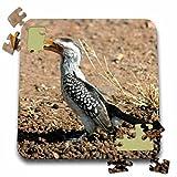 Angelique Cajams Safari Birds - South African Hornbill - 10x10 Inch Puzzle (pzl_26838_2)
