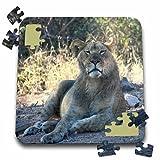 Angelique Cajam Big Cat Safari - Lion relaxing - 10x10 Inch Puzzle (pzl_26830_2)