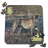 Angelique Cajam Big Cat Safari - South African Cheetah trotting side view - 10x10 Inch Puzzle (pzl_20112_2)