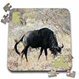 Angelique Cajams Safari Animals - South African Wildebeest side view - 10x10 Inch Puzzle (pzl_26818_2)