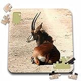 Angelique Cajam Safari Animals - South African Sable antelope - 10x10 Inch Puzzle (pzl_20109_2)