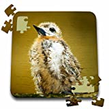 Danita Delimont - Birds - Baby Seagull on Fregate Island, Seychelles-AF39 AWR0020 - Alison Wright - 10x10 Inch Puzzle (pzl_70358_2)