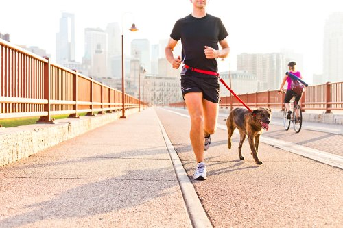 reviews of dog leashes for running