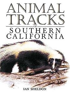 Exploring Animals Tracks in Winter