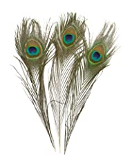 100 Piece High Quality Real Natural Peacock Feathers, 10 to 12